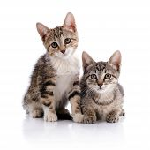 Two Striped Kittens.