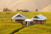 picture of bong  - Hut in green terraced rice field during sunset at Ban Pa Bong Peay in Chiangmai - JPG