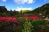Garden Celebrates 80 Years Of King Bhumibol At Doi Ang Khang, Chiang Mai Thailand
