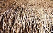 Close-up Of Brown Thatch Background
