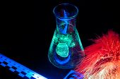 image of dna fingerprinting  - True fluorescence fingerprint with ruler and number - JPG