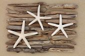 stock photo of driftwood  - Three starfish on driftwood abstract over a sand beach background - JPG