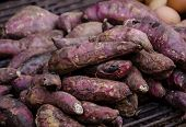 picture of solanum tuberosum  - purple yam burn - JPG