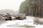 stock photo of cutting trees  - The cut down trees lying together in wood - JPG