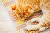 foto of orange kitten  - Peaceful Orange Red Tabby Cat Male Kitten Curled Up Sleeping In His Bed On Laminate Floor - JPG