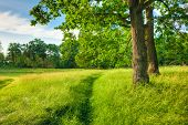 stock photo of path  - Summer Sunny Forest Trees - JPG