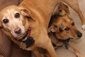 Pleading Pups