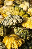 picture of wart  - Warted Patission cucurbita pumpkin pumpkins from autumn harvest on a market - JPG