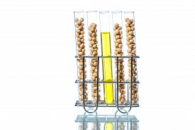 image of modifier  - Soybean genetically modified Plant Cell laboratory - JPG