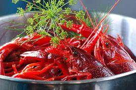 stock photo of crawdads  - Cooked crayfish with dill i a stainless steel bowl - JPG
