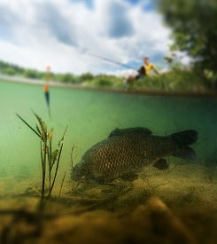 stock photo of freshwater fish  - Split shot of the freshwater pond with fisherman above the surface and big fish  - JPG
