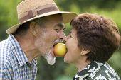 picture of elderly woman  - Happy elderly couple bite off apple in the garden - JPG