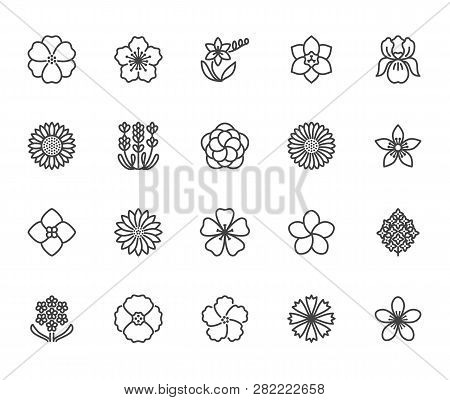 Flowers Flat Line Icons Beautiful