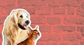 Cat And Dog, Abyssinian Kitten , Golden Retriever Looks At Right In Front Of Bright Brick Wall. Cart poster