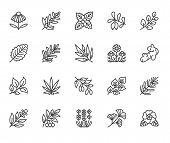 Medical Herbs Flat Line Icons. Medicinal Plants Echinacea, Melissa, Eucalyptus, Goji Berry, Basil, G poster