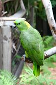 Colorful Green Parrot