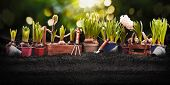 Gardening Tools and Plants on Soil Background. Spring Garden Works Concept poster
