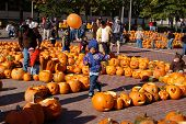 Camp Sunshine Pumpkin Festival In Boston