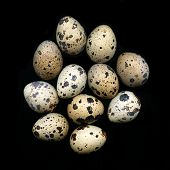 stock photo of b12  - A pile of quail eggs against black background - JPG