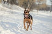 Dog Running On The Snow