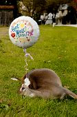 image of get well soon  - Deceased deer with a get well soon balloon - JPG