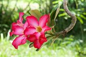 Tropical Flower With Soft Boke