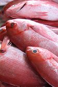 pic of red snapper  - Fresh red snapper for sale in a fish market.