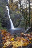 Horsetail Falls Oregon In Fall