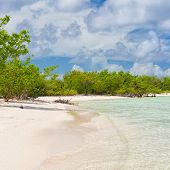 Virgin tropical beach with trees near the water at Coco Key (Cayo Coco) in Cuba on a sunny summer da