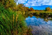 foto of opulence  - Large Cyprus Trees with Stunning Fall Color Lining a Crystal Clear Texas Hill Country Stream.  Blue skies, white clouds, and green reeds.