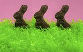 Chocolate Bunny Trio
