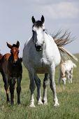 Horses - Mare & Baby (tall)