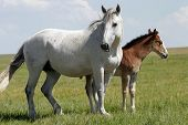 Horses - Mare & Baby (wide)