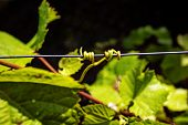 Outdoors Wine Plant Stick To Metal Wire