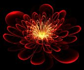 Beautiful Red Flower On Black Background. Computer Generated Graphics.