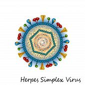 picture of lipids  - Herpes simplex virus particle structure isolated on white background - JPG
