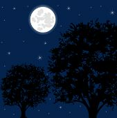 Moon night and tree