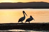 Pelican Birds Lagoon Colors Sunset