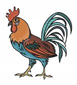 Colorfull Rooster