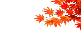 stock photo of fall leaves  - Autumn situation with red and yellow leaves for your autumn design - JPG