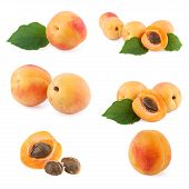 Set of ripe Apricots with leaf