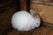 picture of rabbit hutch  - Little rabbit cornered in fear  - JPG