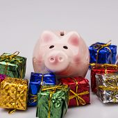 Pig Money Box Between Christmas Gift