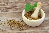Coriander seeds in mortar and fresh coriander leaves with copy space