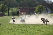 Batch Of Horses Running Away In The Dust