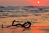 Seascape at sunrise with driftwood and warm colors from the early morning sun