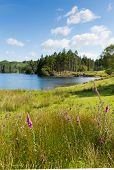 Tarn Hows Lake District National Park England uk one of the top scenic destinations poster