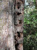 woodpecker holed tree