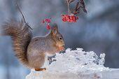 Squirrels Ice Sculpture
