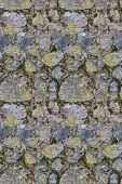 seamless background from stones in moss and lichen